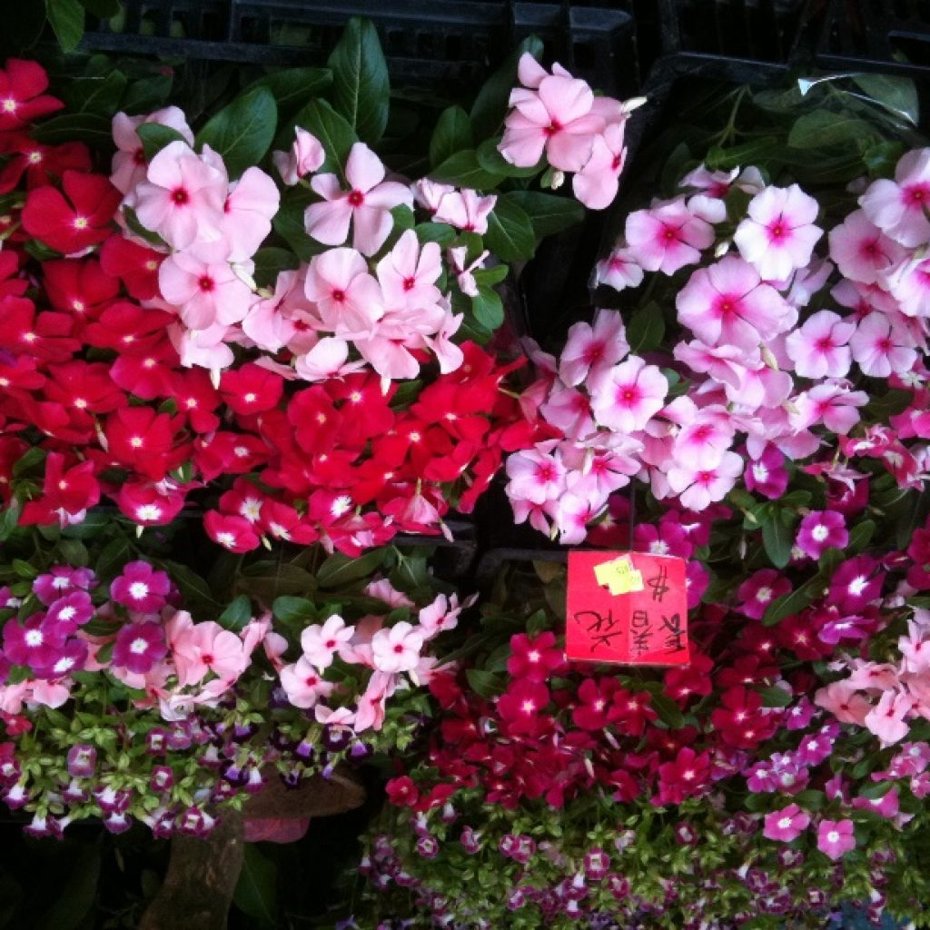 Flower Market Hongkong - iPhone3GS