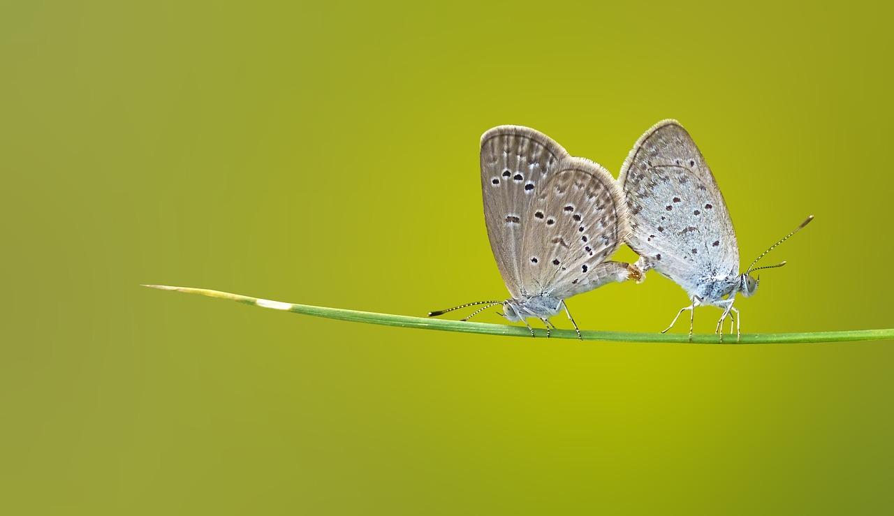 butterfly-1057768_1280