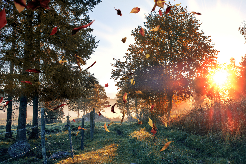 pumpkin Glaze Autumn Overlays and Actions