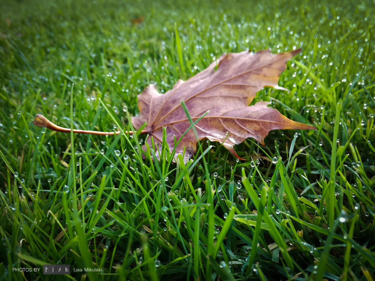 Solo Leaf on Grass