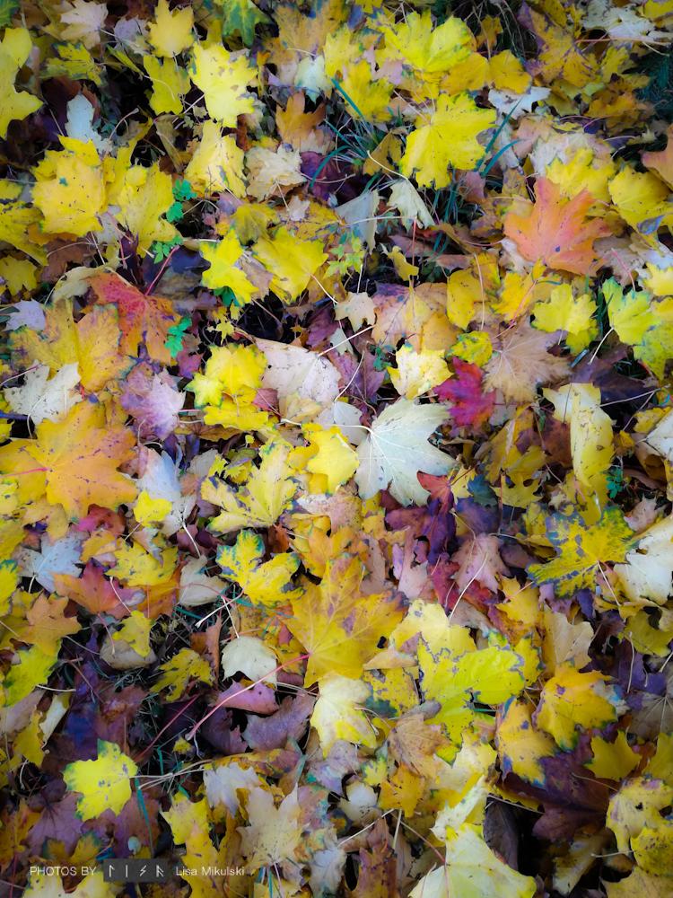 Ocean of Leaves