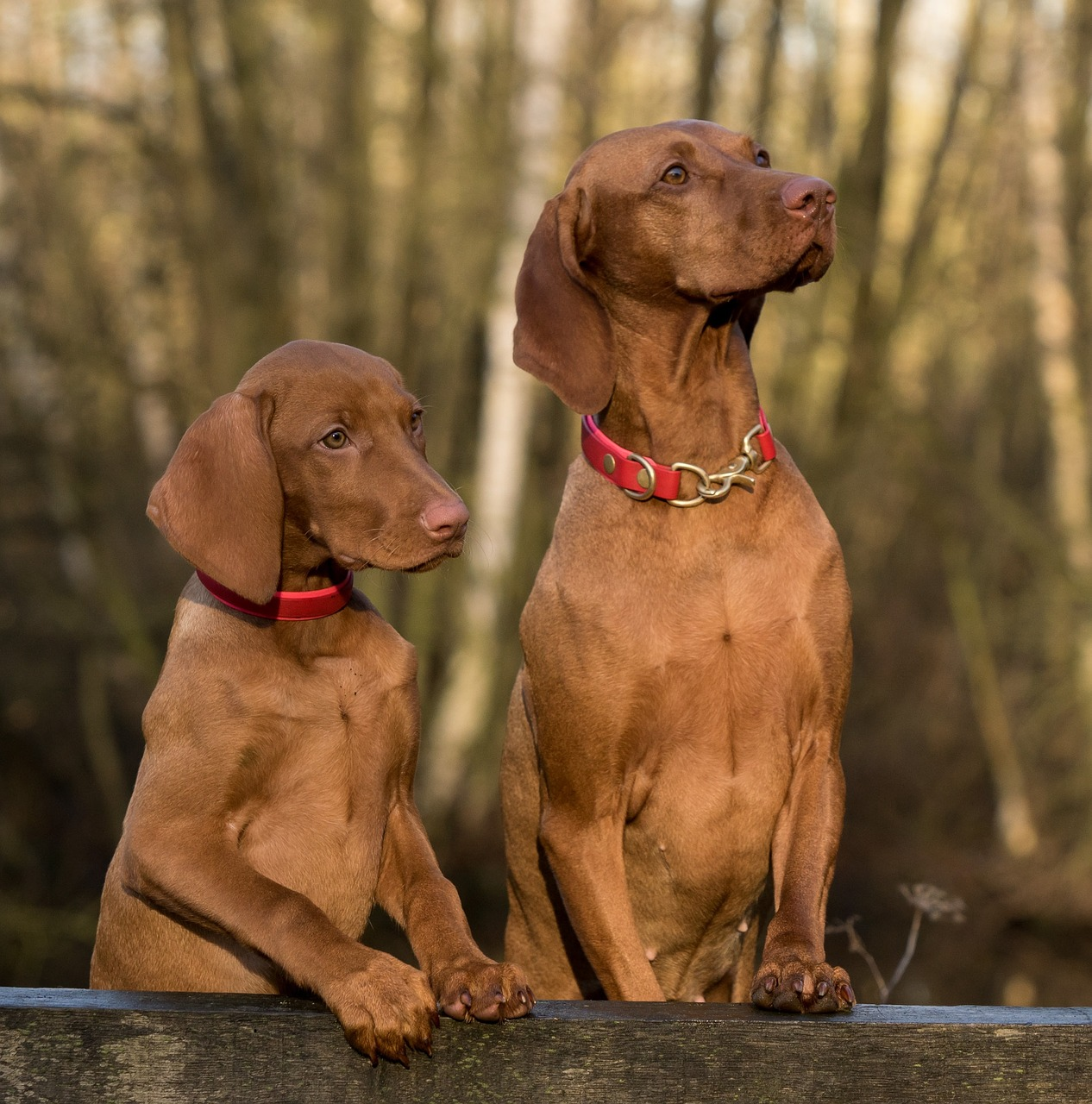 how to build confidence in your dog