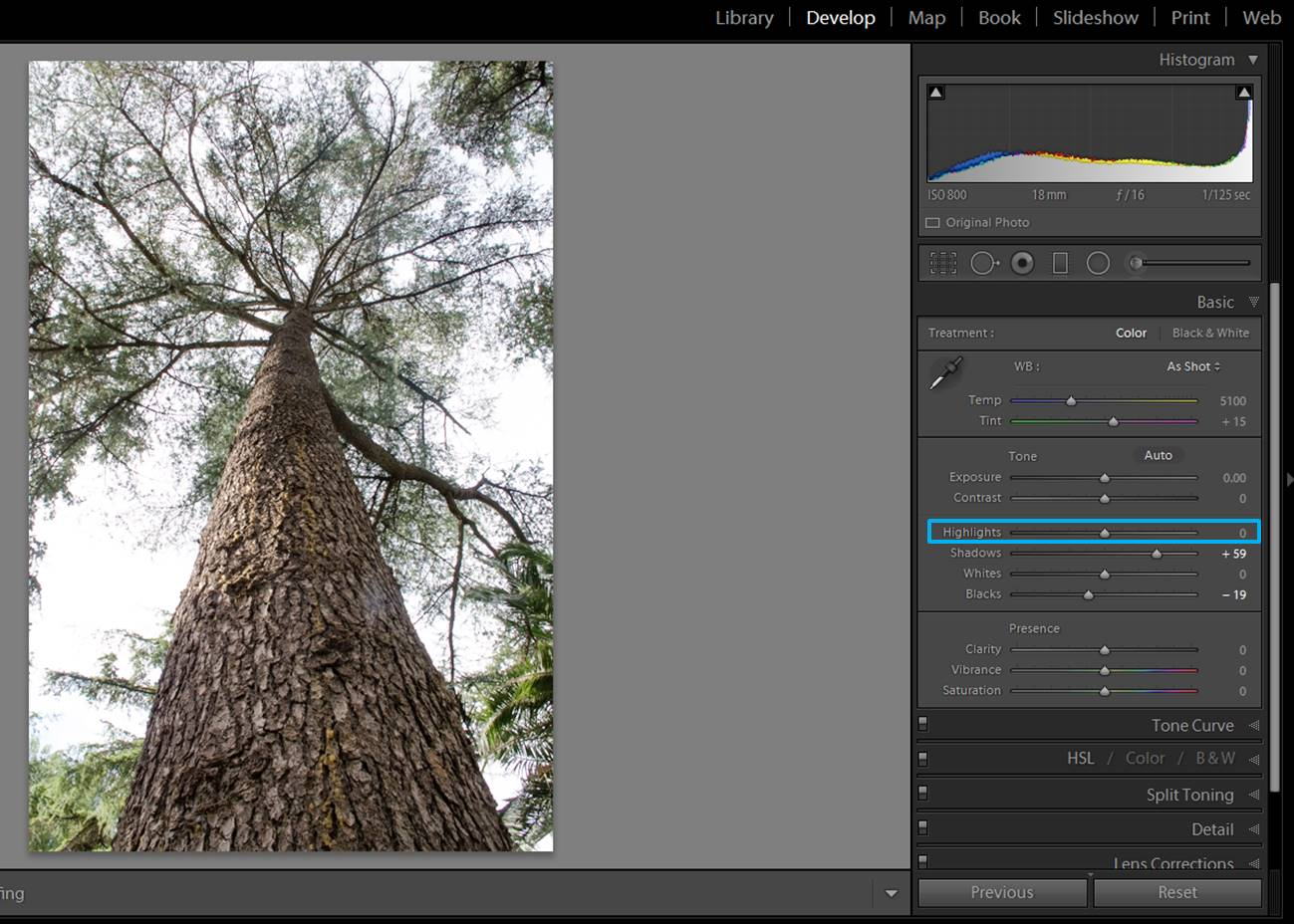 screenshot-tree-1