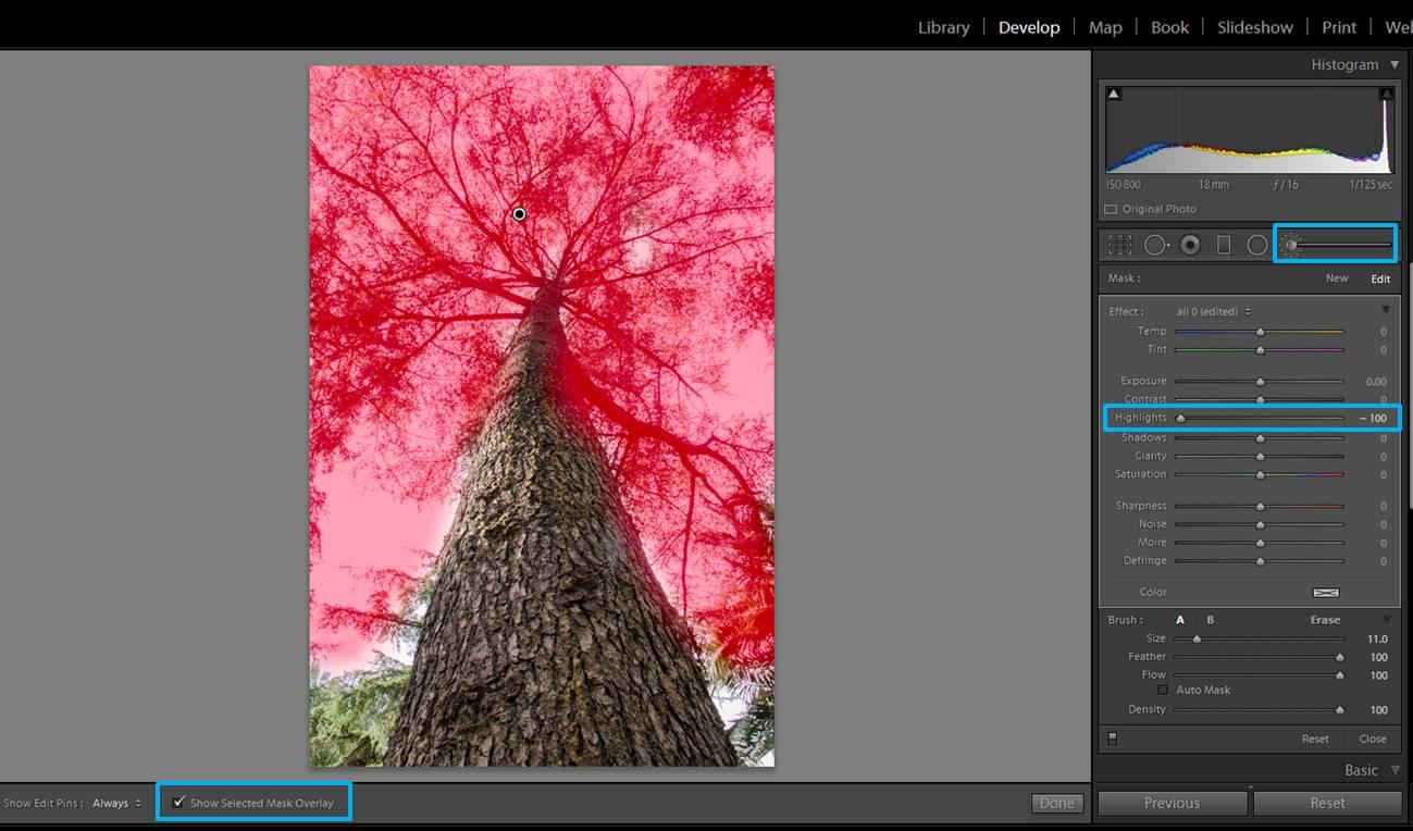 screenshot-tree-2