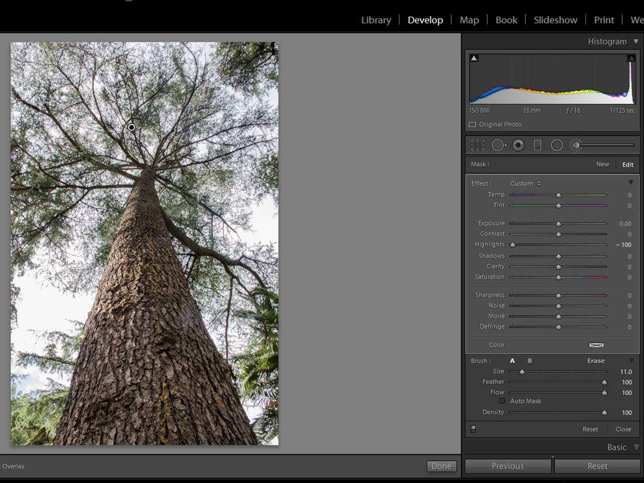 screenshot-tree-3