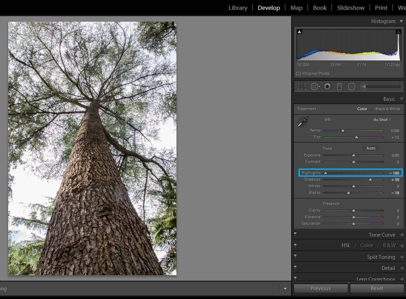 screenshot-tree-4