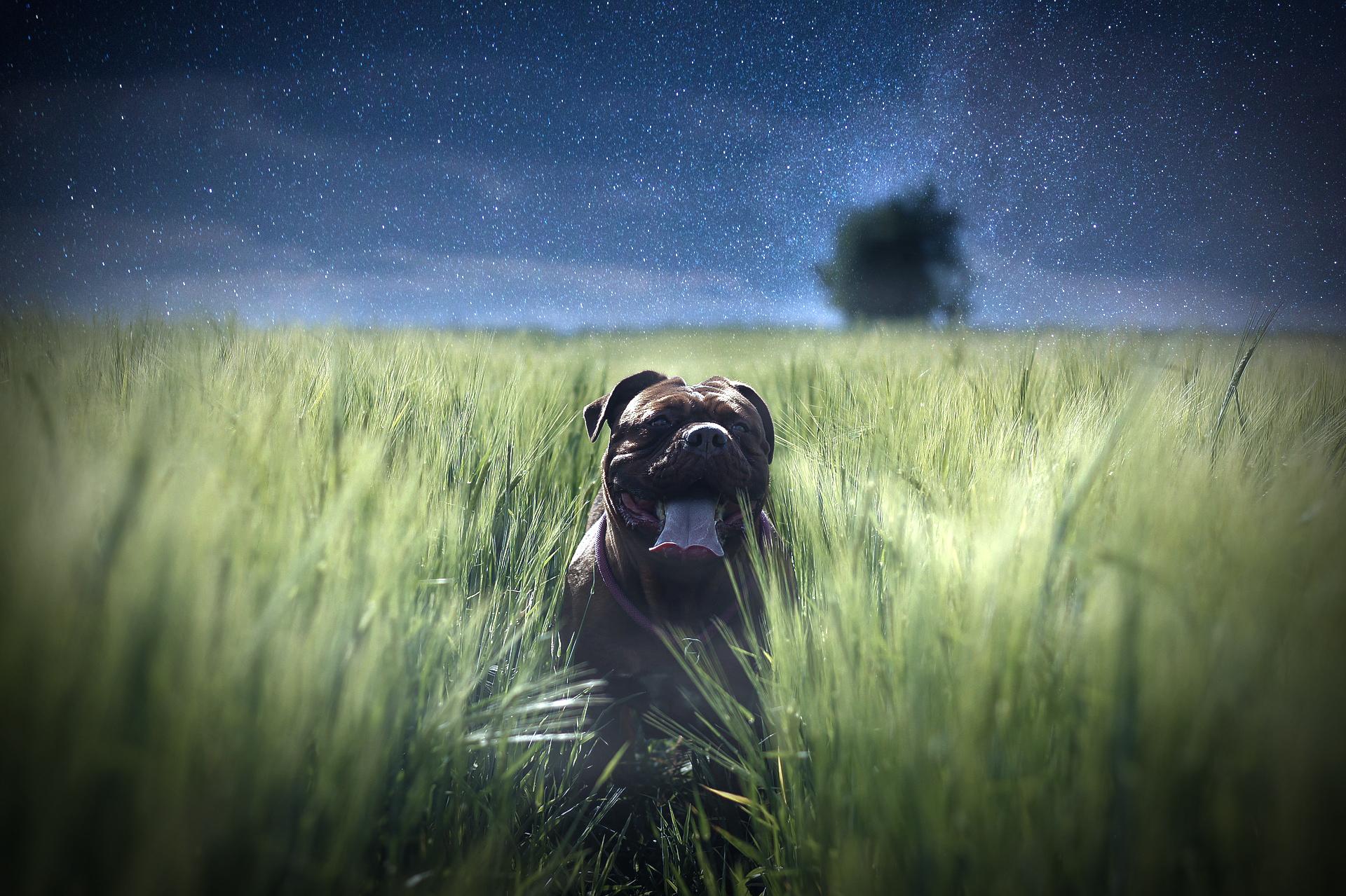 dognightmain
