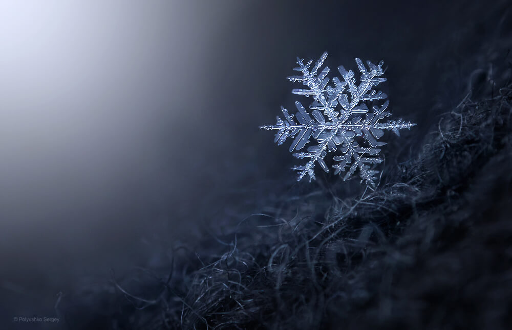 macro photography in winter  how to photograph snowflakes