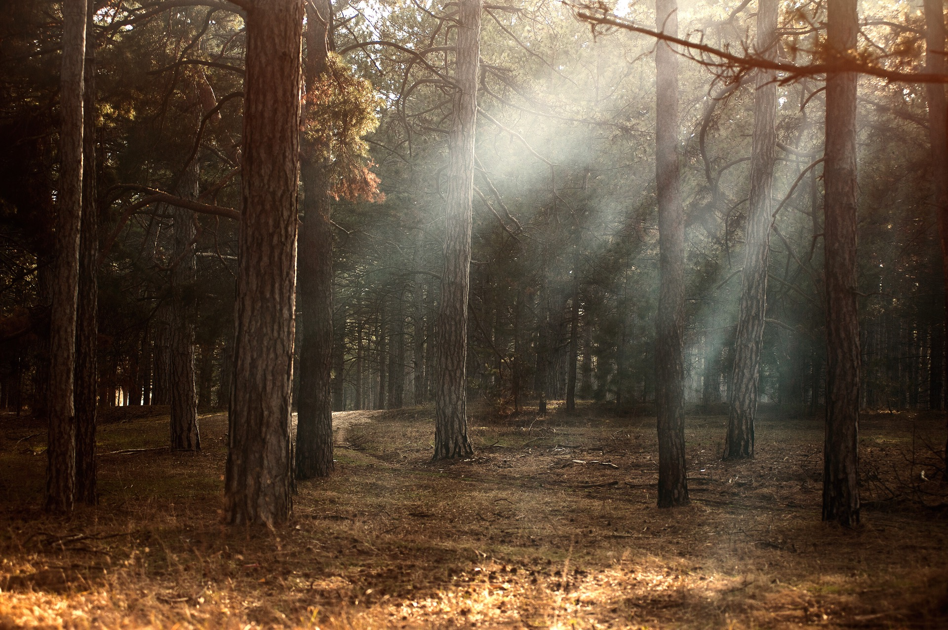How To Simulate Realistic Light Rays Effects In Adobe