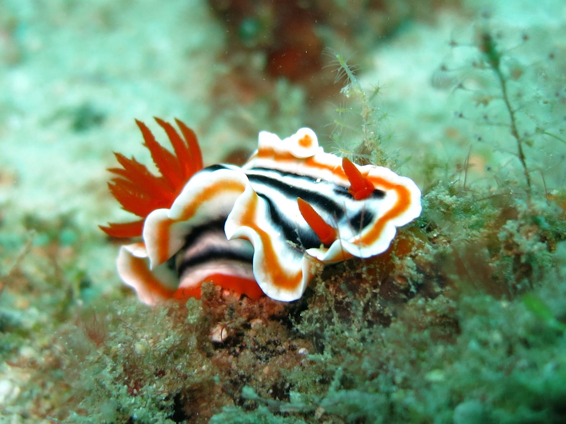 Underwater macro photography