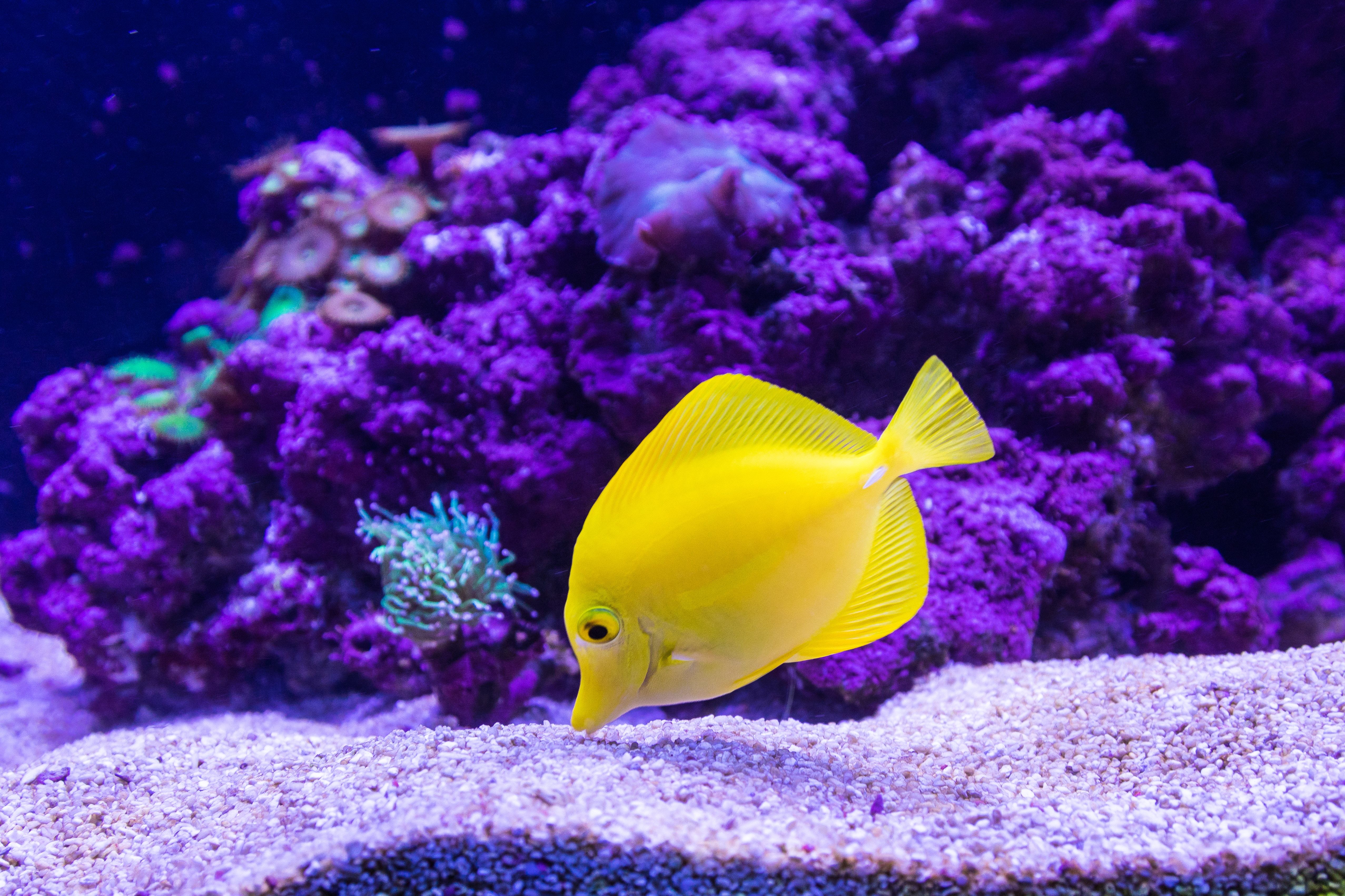 How to photograph pets fish in the tank for a family day for What is the fastest swimming fish