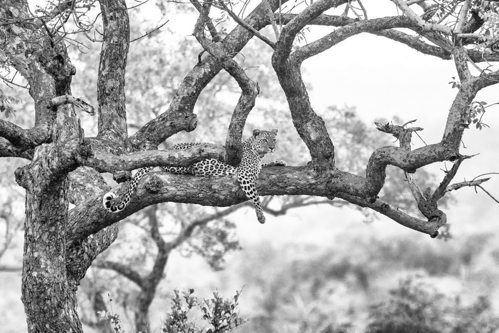 Photo by Andrew Schoeman