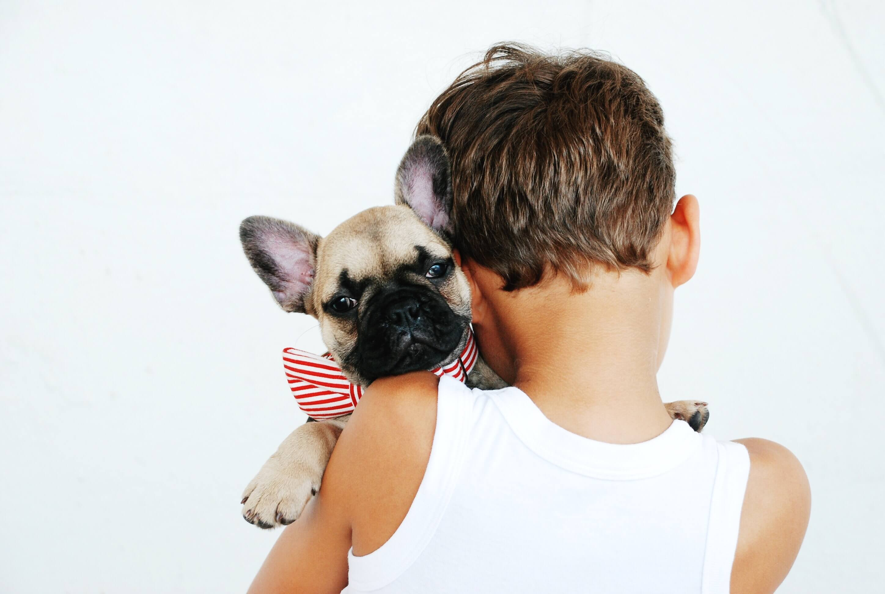 boy holding a French bulldog puppy