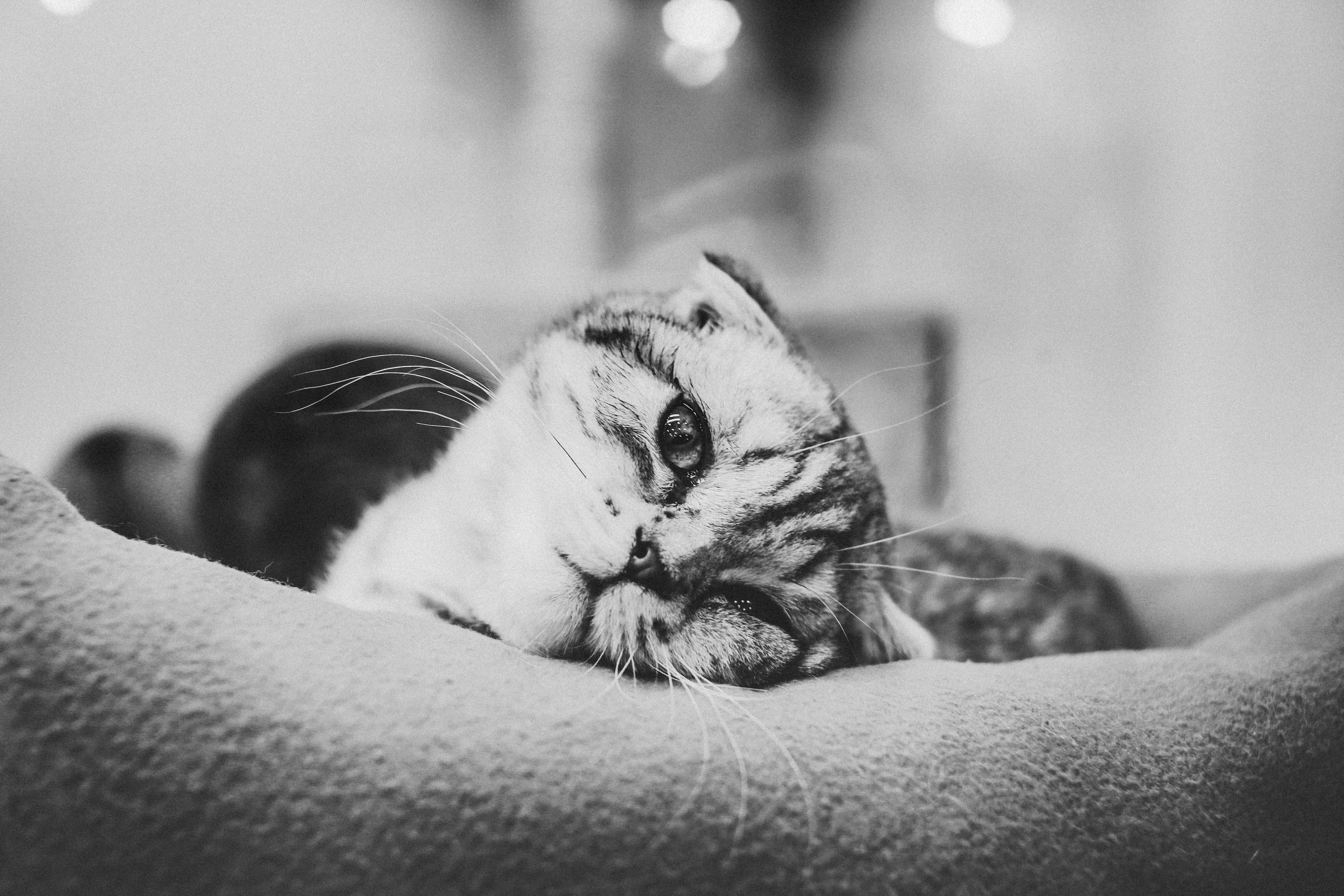 b&w cat august