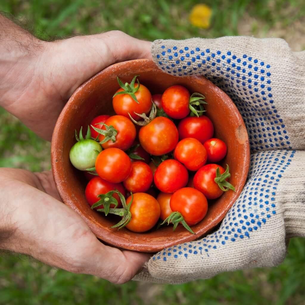 gardening hobby August