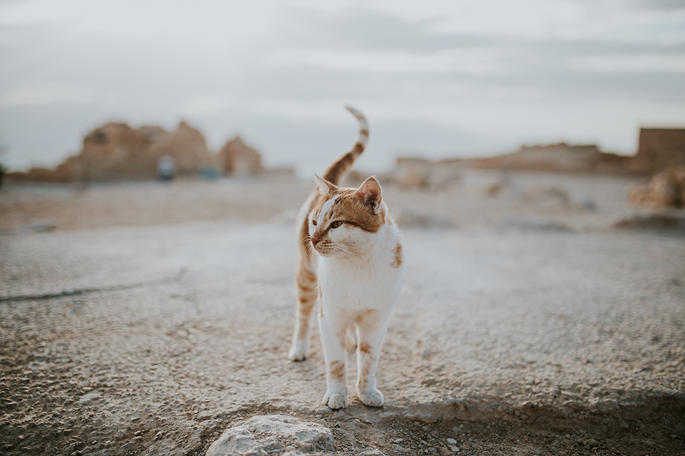 stray cat wandering on a roof
