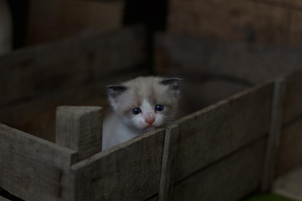 kitten sitting in a box