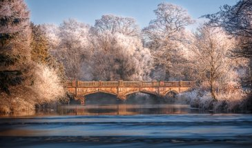 Winter Wonderland: Capturing the Beauty of Winter Close to Home