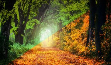 Turn Autumn into Summer in Lightroom and use Photoshop to Create Light Effects