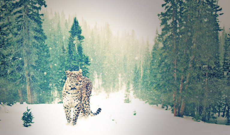 How to Easily Create a Lomo Effect in Photoshop
