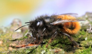 How to photograph Bees: The fascinating world of Macro Photography