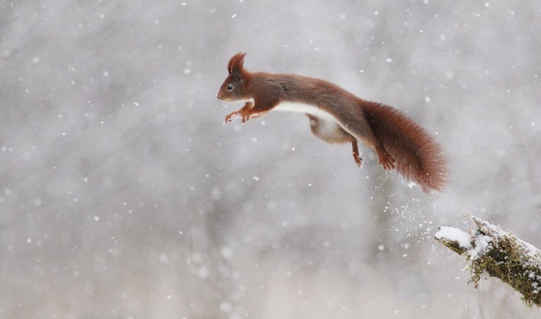 Wildlife Photography: Which Animals to Photograph in Winter