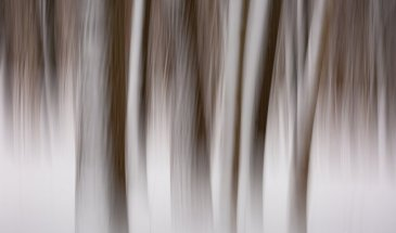 Photographer Focus: Stephanie Johnson Photography – An Iowa based Abstract, ICM and Landscape Photographer