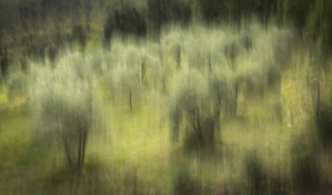 Blurred Lines: Shake Your Camera For A Different Perspective