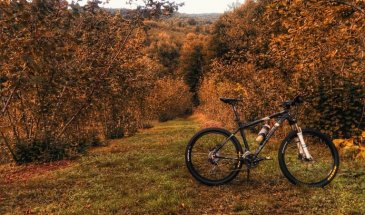 Tips For Achieving The Best Fall Colors