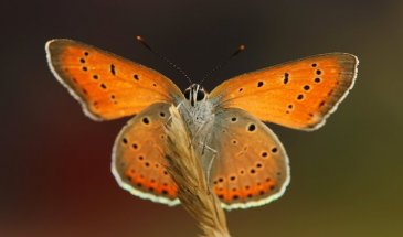 Macro Photography: How to photograph Butterflies