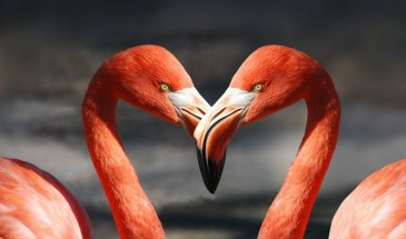 How to Capture Great Photos of Flamingos