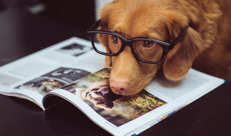 Dog Photography For Beginners