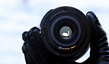 Reverse Lens Macro Photography: Changing Reality in Seconds