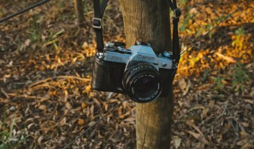 Which One Is The Best Canon Camera  – Full Buying Guide