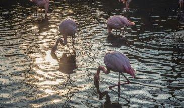 Pulicat: An enchanting Flamingo paradise