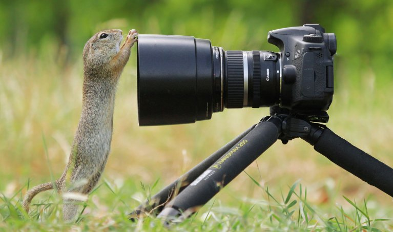 Remote Shutter Releases for Wildlife Photography