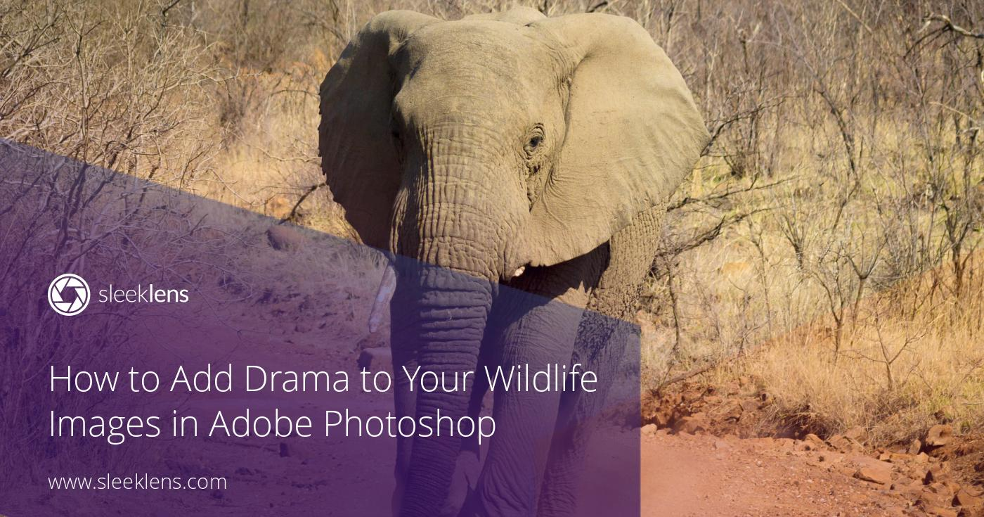 How to Add Drama to Your Wildlife Images in Adobe Photoshop