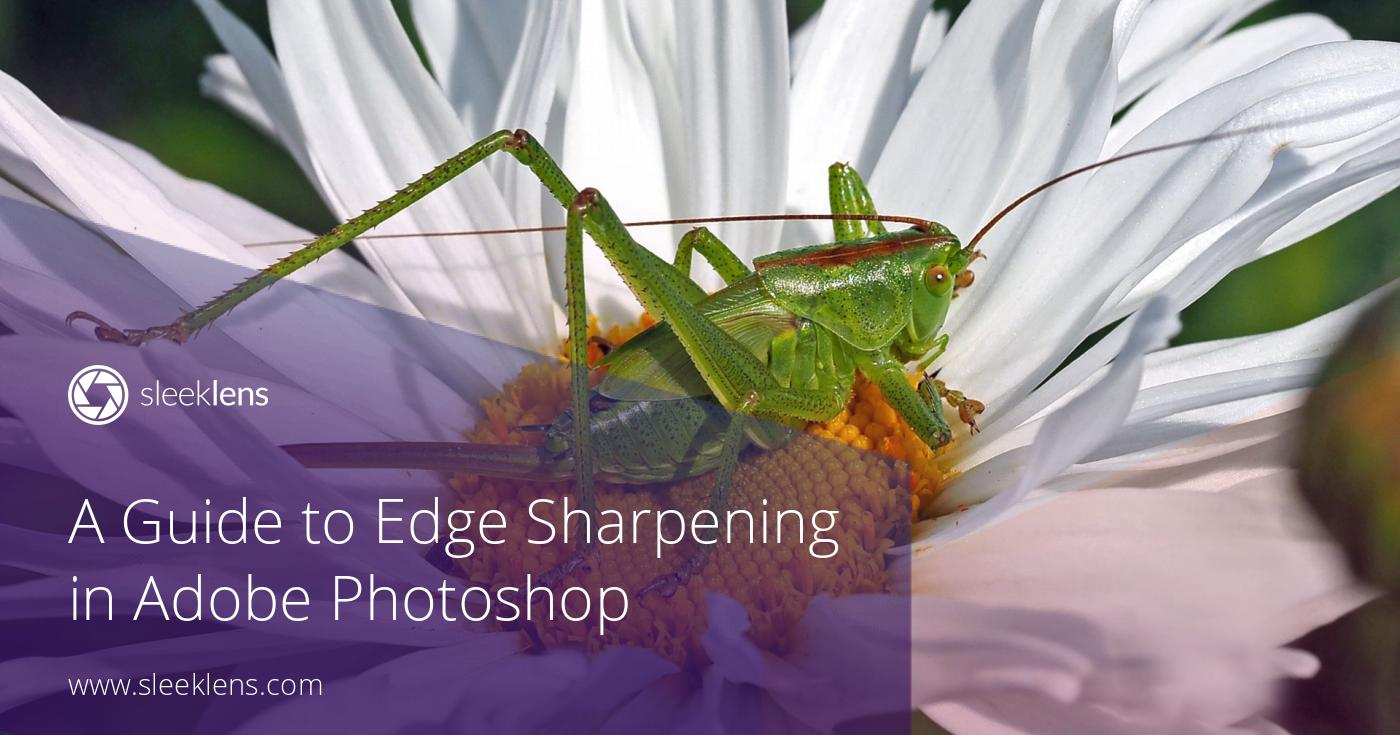 A Guide to Edge Sharpening in Adobe Photoshop for Beginners