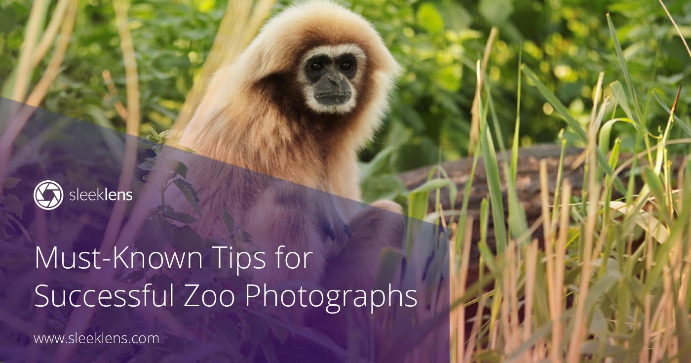 Must-Known Tips for Successful Zoo Photographs