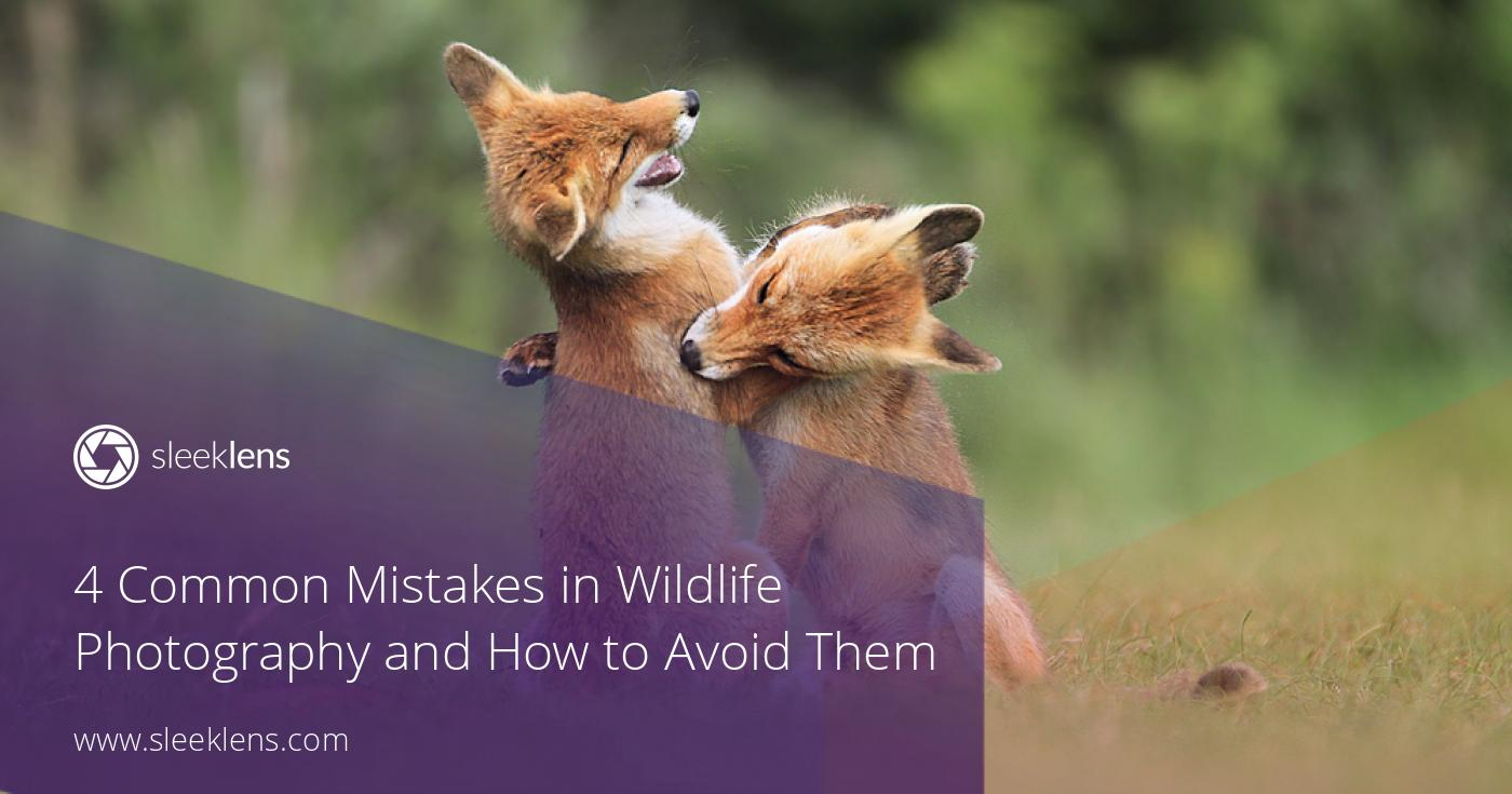 4 Common Mistakes in Wildlife Photography and how to avoid them