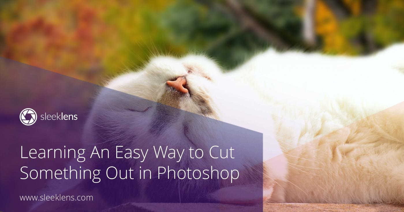Learning An Easy Way to Cut Out Animal Fur in Adobe Photoshop