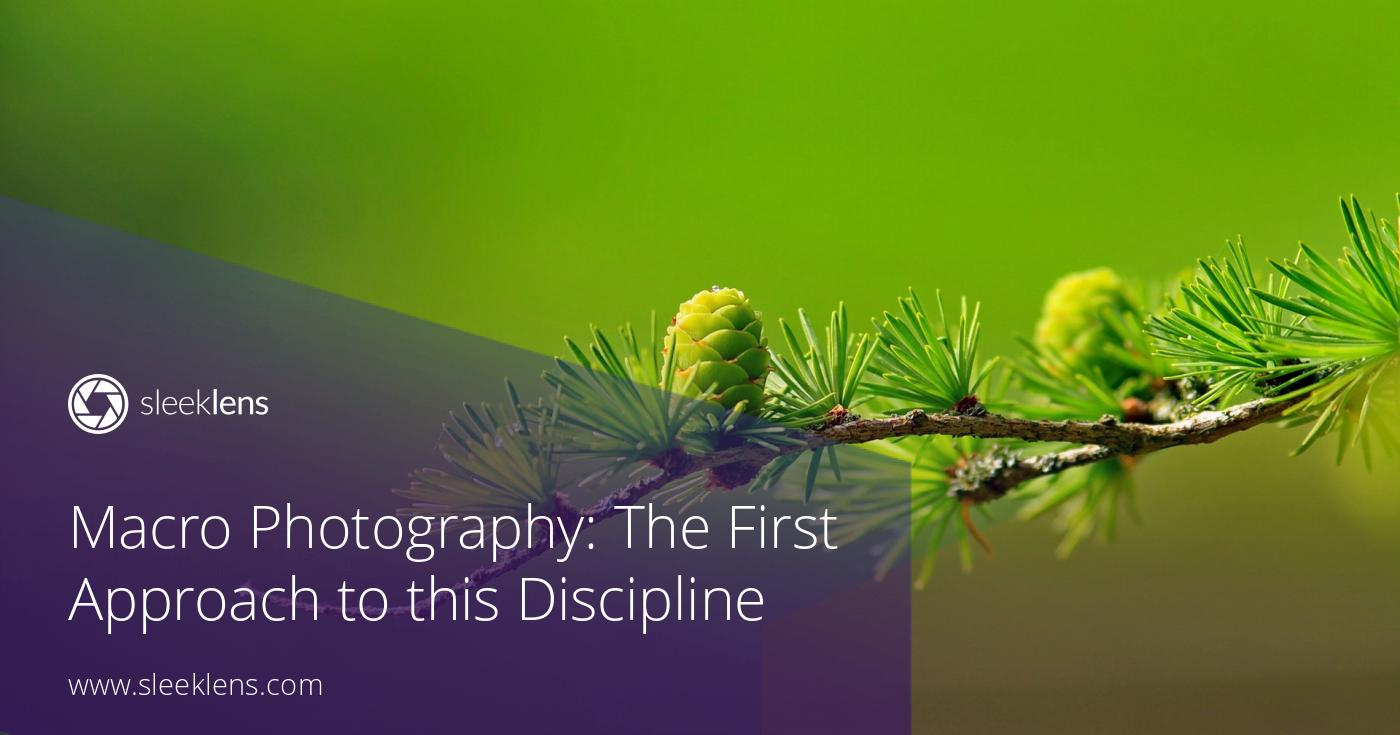 Macro Photography: The First Approach to this Discipline