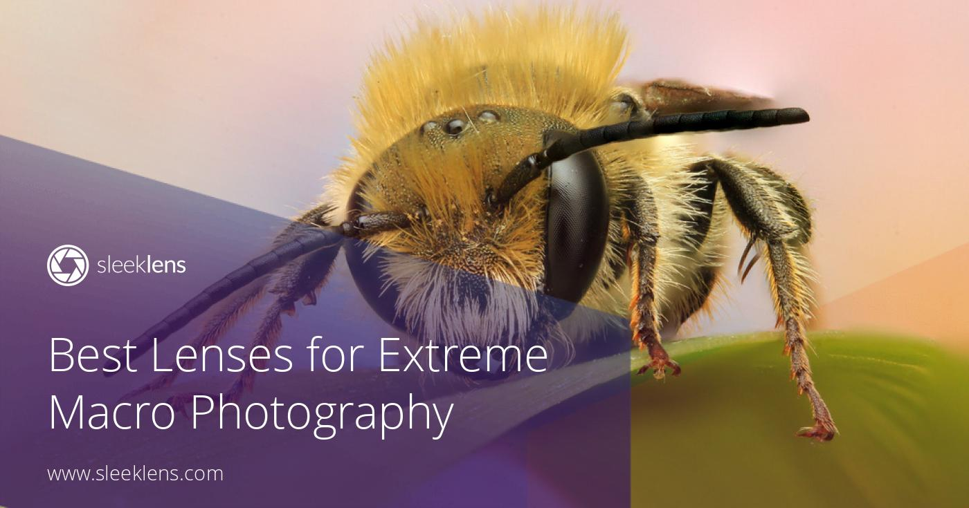 Best Lenses for Extreme Macro Photography